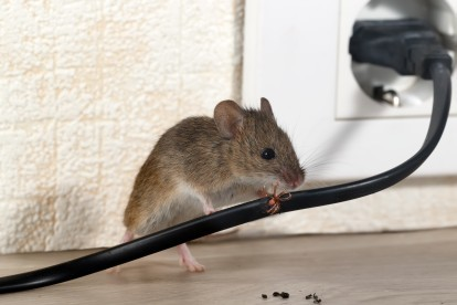Pest Control in Chertsey, Ottershaw, Longcross, KT16. Call Now! 020 8166 9746
